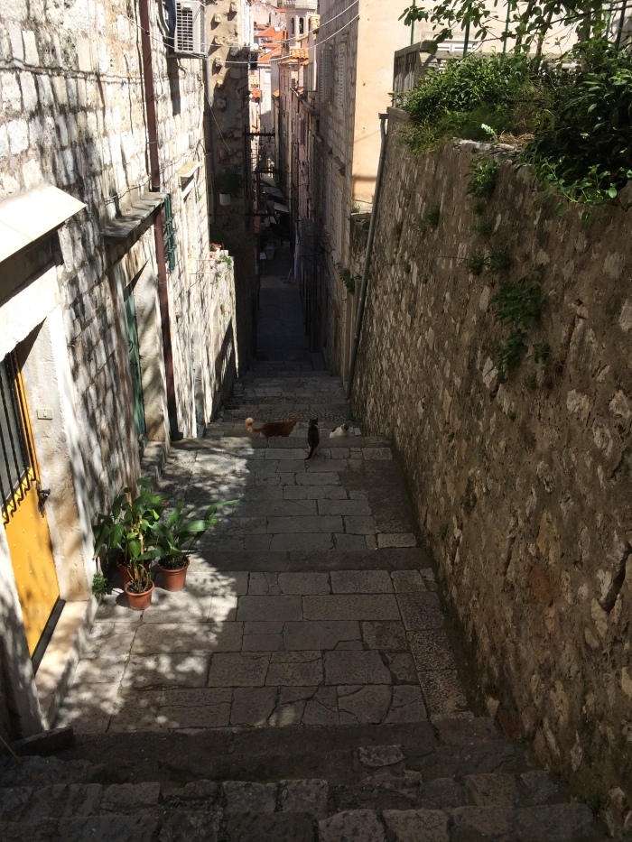 So many steps...and stray cats!  Typical of Old Dubrovnik.